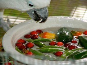 Dinh dưỡng chăm sóc cho vẹt Châu Úc Cockatoo