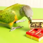 Clicker for trainning parrots