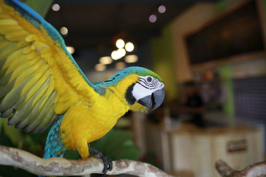 Bé Kiwi tại Pet Me Coffee