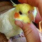 Periodic Health Examination & Beauty Care For Parrot
