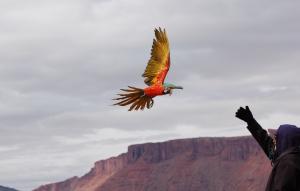Dạy vẹt thả bay tự do